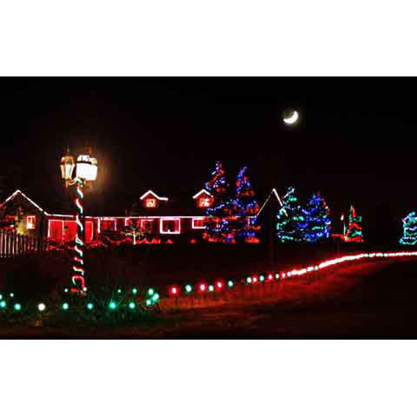 Christmas Light Stakes Image