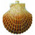 Large Clam Shell Christmas Ornament