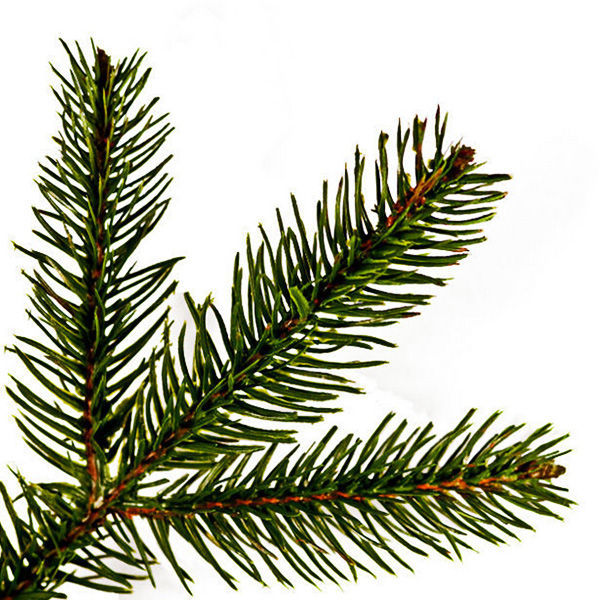 9 ft. x 54 in. Artificial Christmas Tree Image
