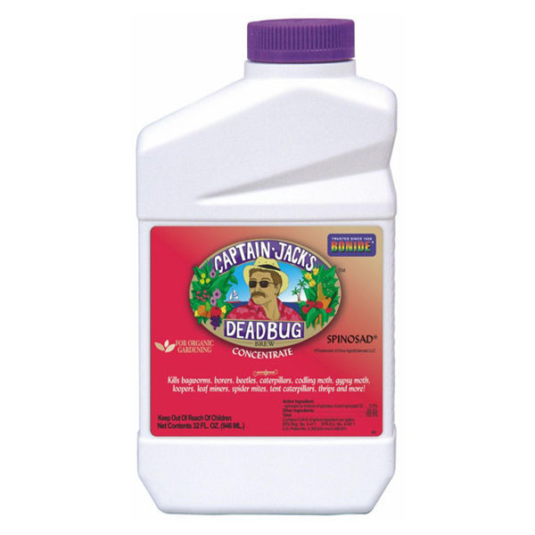 Captain Jack's Dead Bug Brew Concentrate - 1 qt. Image