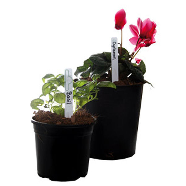 Jump Start - Plant Markers - 6 in. Image