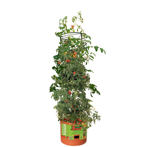 Tomato Barrel Tower - 4 ft. Image
