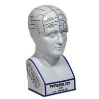 Phrenology Head - Museum Model - Features White Crackled Porcelain with Hand-Applied Decals and Lines - Authentic Models MG020
