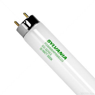 T8 Linear Fluorescent Tube